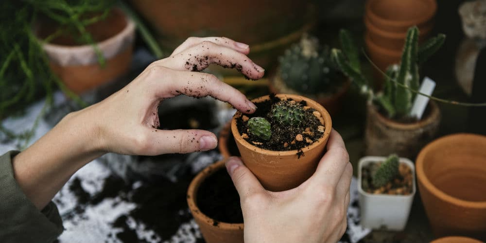 Her finder du tre gode tips til at leve end mere miljøvenlig livsstil